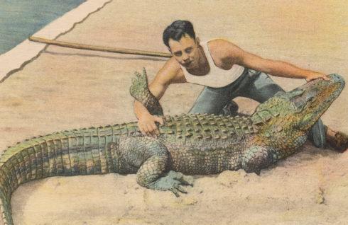 Beschwerdemanagement Schweiz. Mann ringt mit Alligator.
